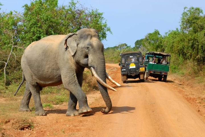 elephant-yala-national-park-sri-lanka-surf-travel-3
