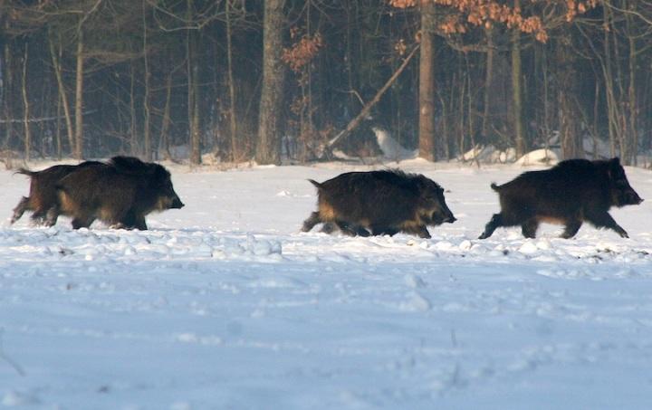 bialowieza_forest